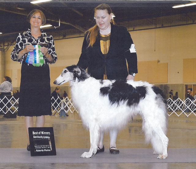 "BBE, BW Judge Patricia Delong, Vancouver Kennel Club Calypso is getting the hang of this ""Show Dog""; stuff. Clackamas Kennel Club. Judge Anne T Fleming"